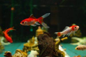 аквариум, рыбки