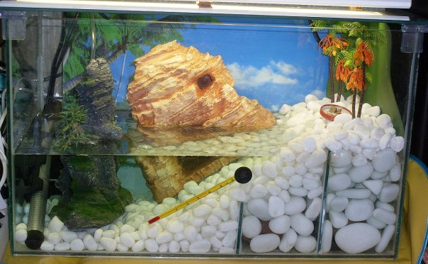 аквариум для крабов