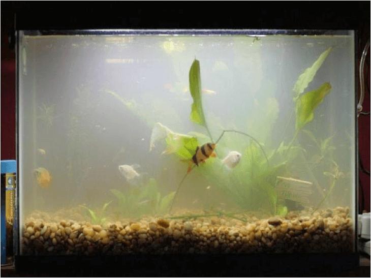 аквариум загрязнен
