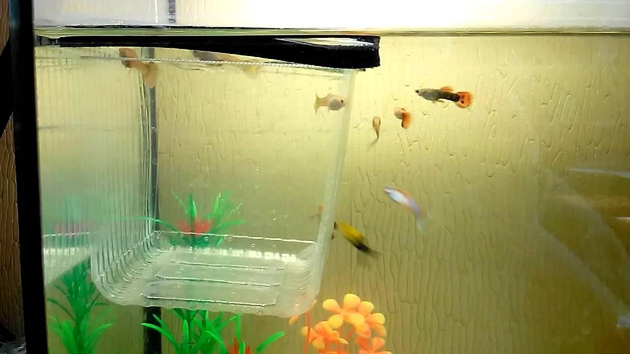 Аквариумы для рыбок своими руками