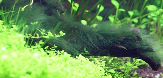 налет и водоросли