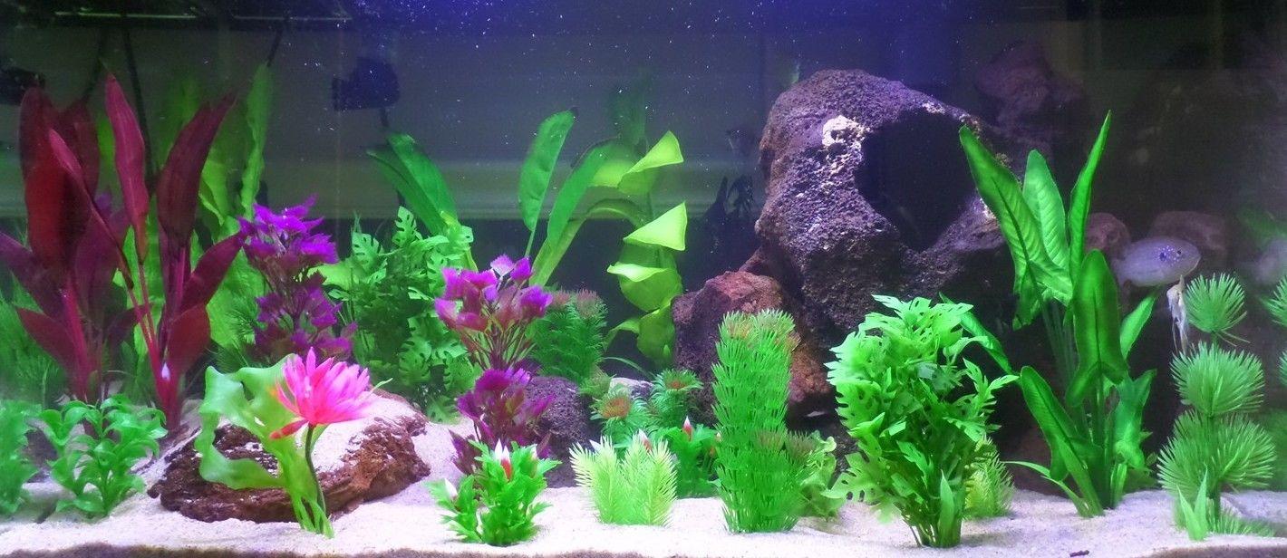 ухоженный аквариум