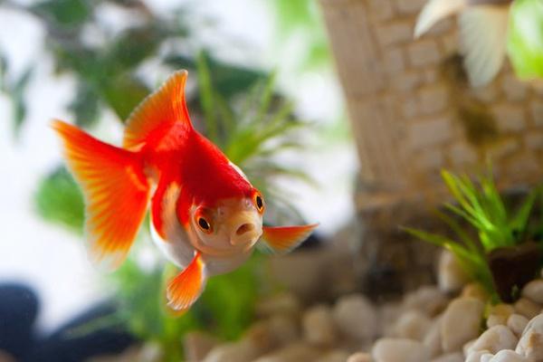 рыбка плывет