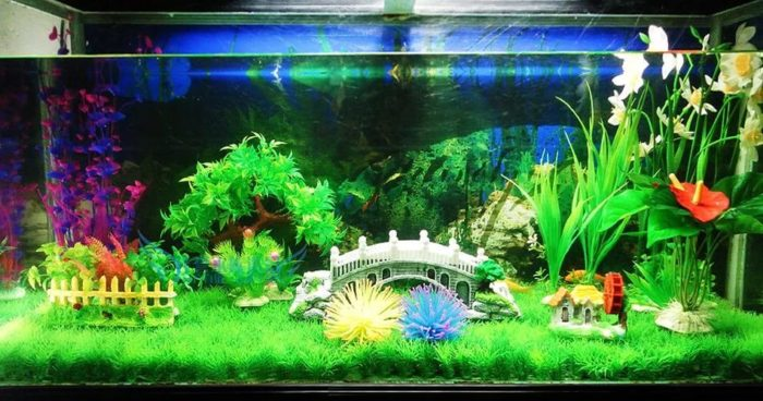 Уход за рыбками в аквариуме