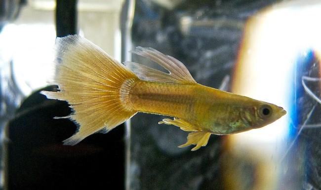 гниль плавниковая у рыб