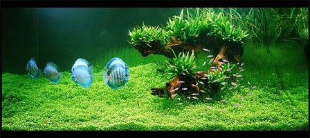 интерьер аквариума Амано