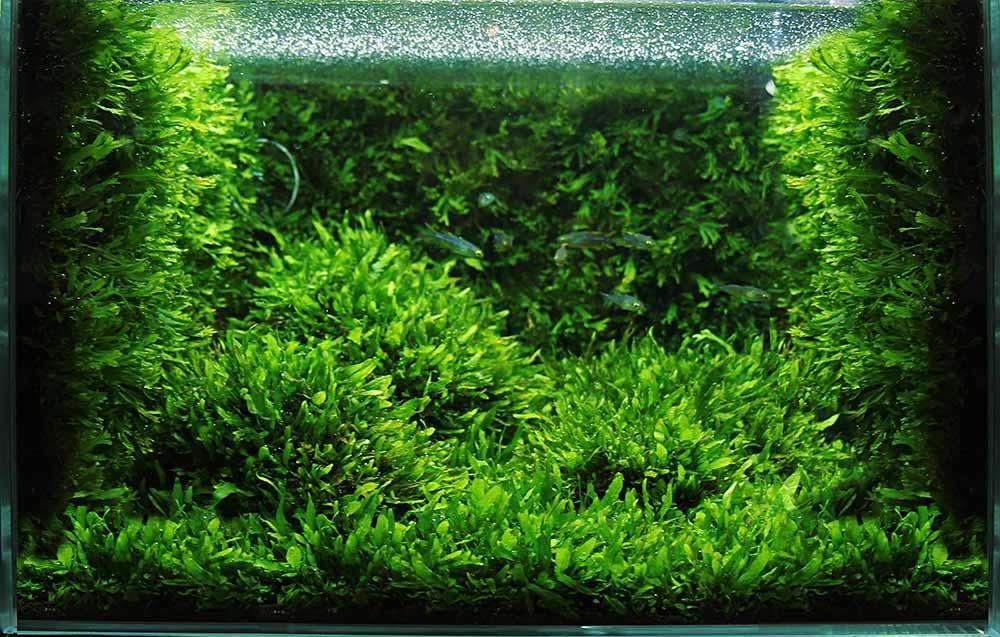 Нужен-ли-углекислый-газ-в-аквариуме