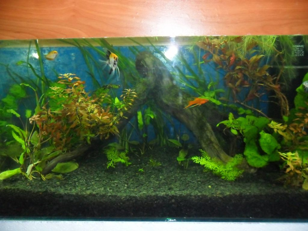 вода в аквариуме