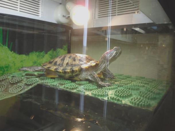 Как сделать островок для черепахи в домашних условиях