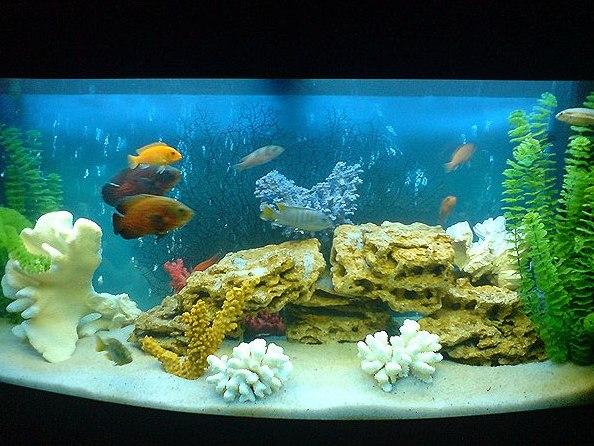 Жесткость воды в аквариуме - как ее понизить или повысить
