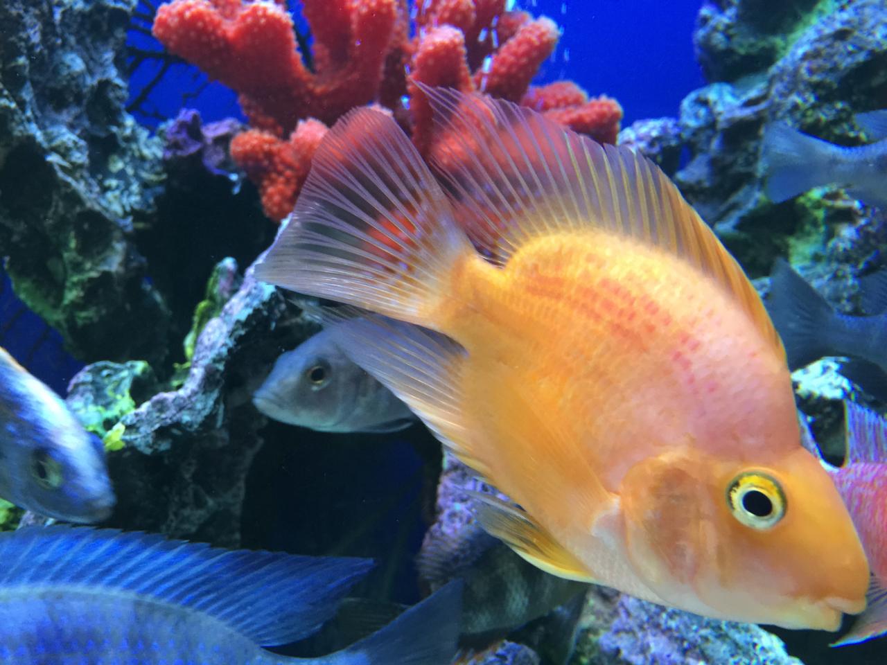 Советы по лечению ихтиофтиридиоза у аквариумных рыб