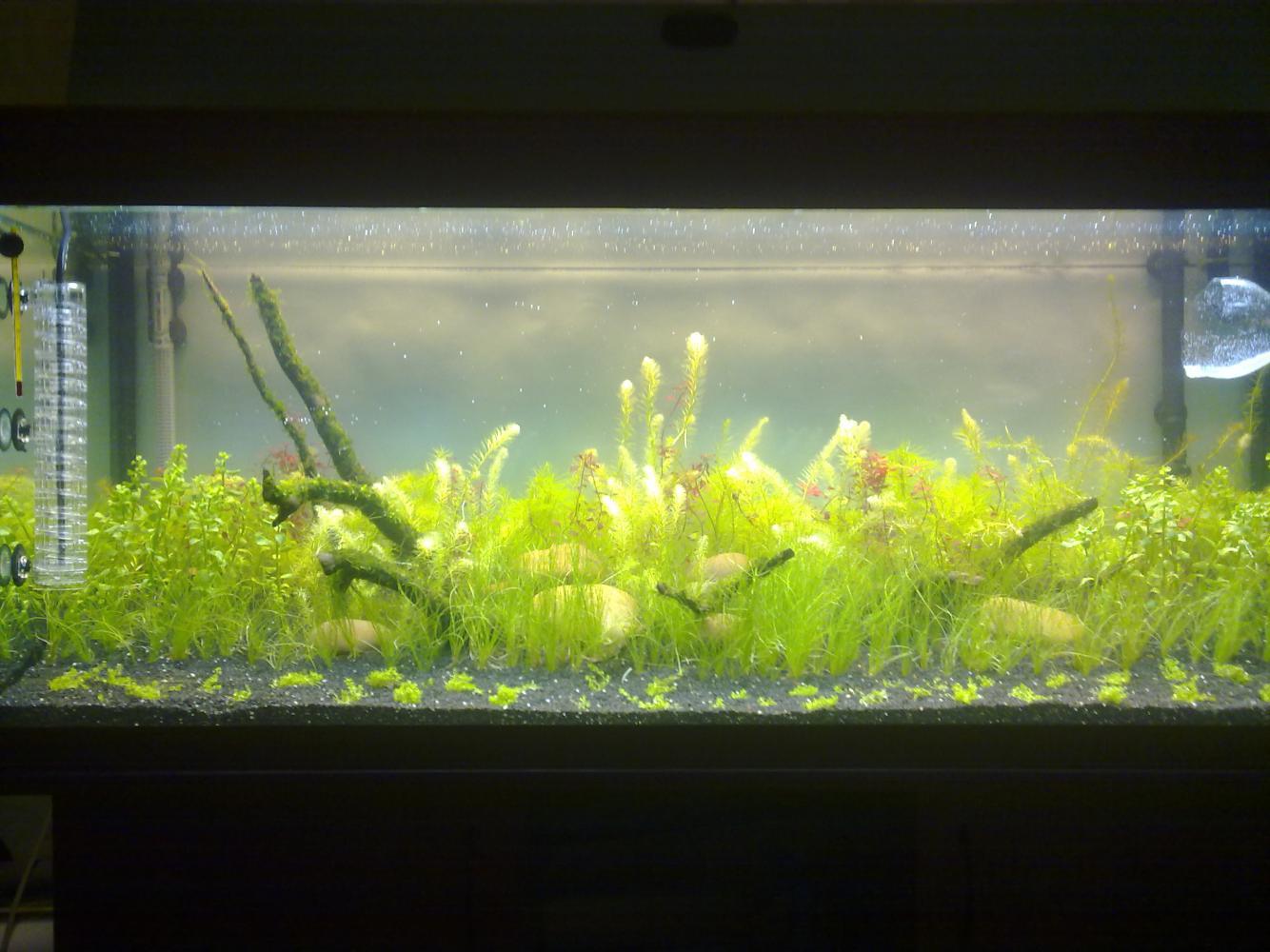 Запускаем аквариум с растениями