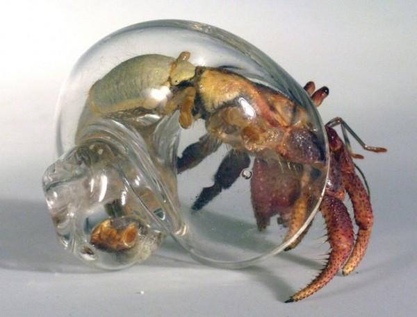 стекляная раковина