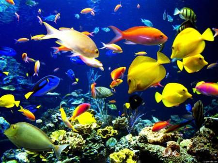 разные виды рыб