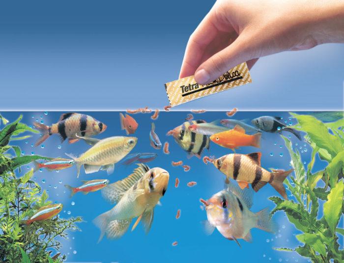Кормление аквариумных рыбок