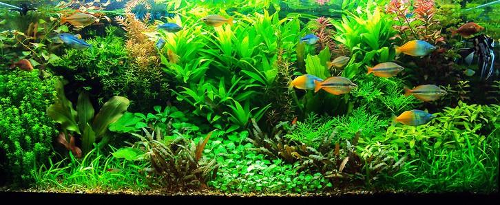 аквариум с растительностью