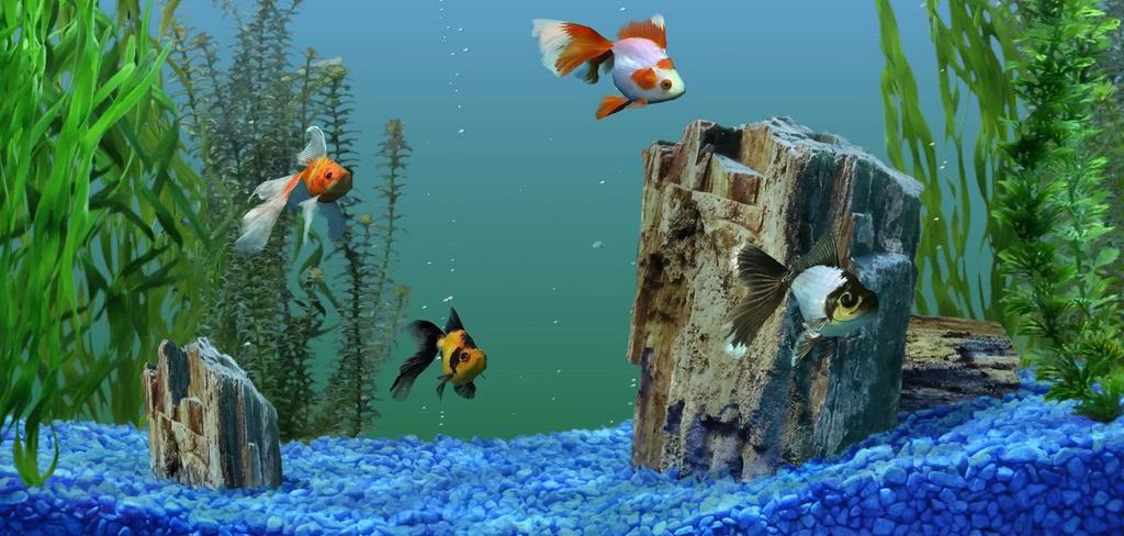 Первый запуск аквариума с нуля пошаговая инструкция — Drugdoma
