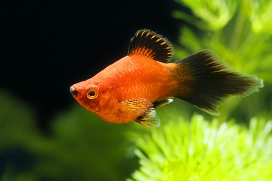 Самые неприхотливые рыбки для маленького аквариума