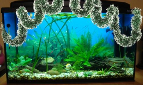 украшенный аквариум