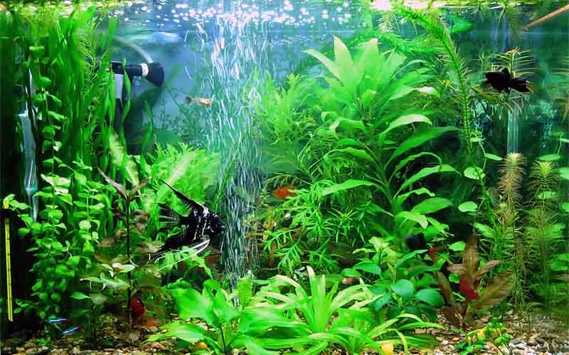 Важность кислорода в аквариуме