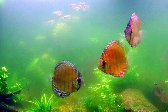 рыбы в цветущем аквариуме