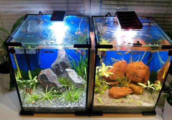 Нано рыбки для маленьких аквариумов