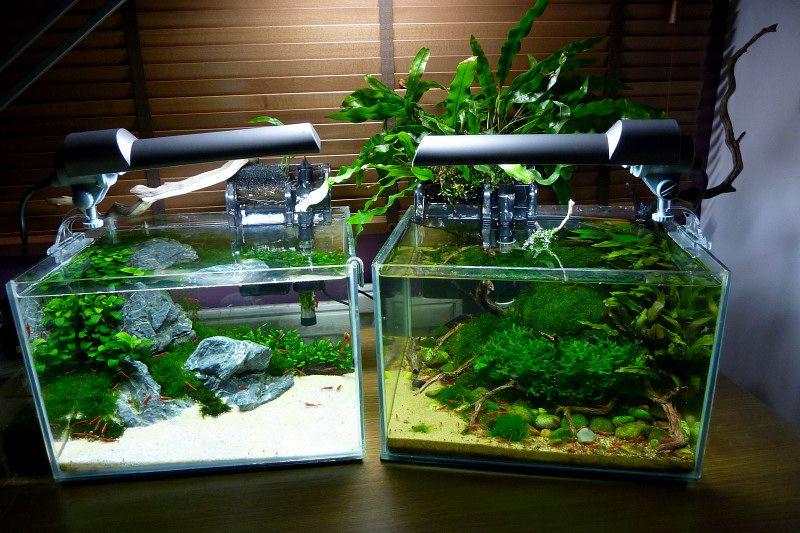 Рыбки для маленького нано аквариума